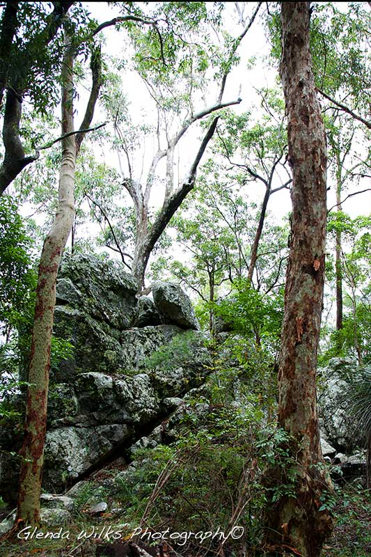 a rainforest walk scene at the Western Window towards Mt Nebo